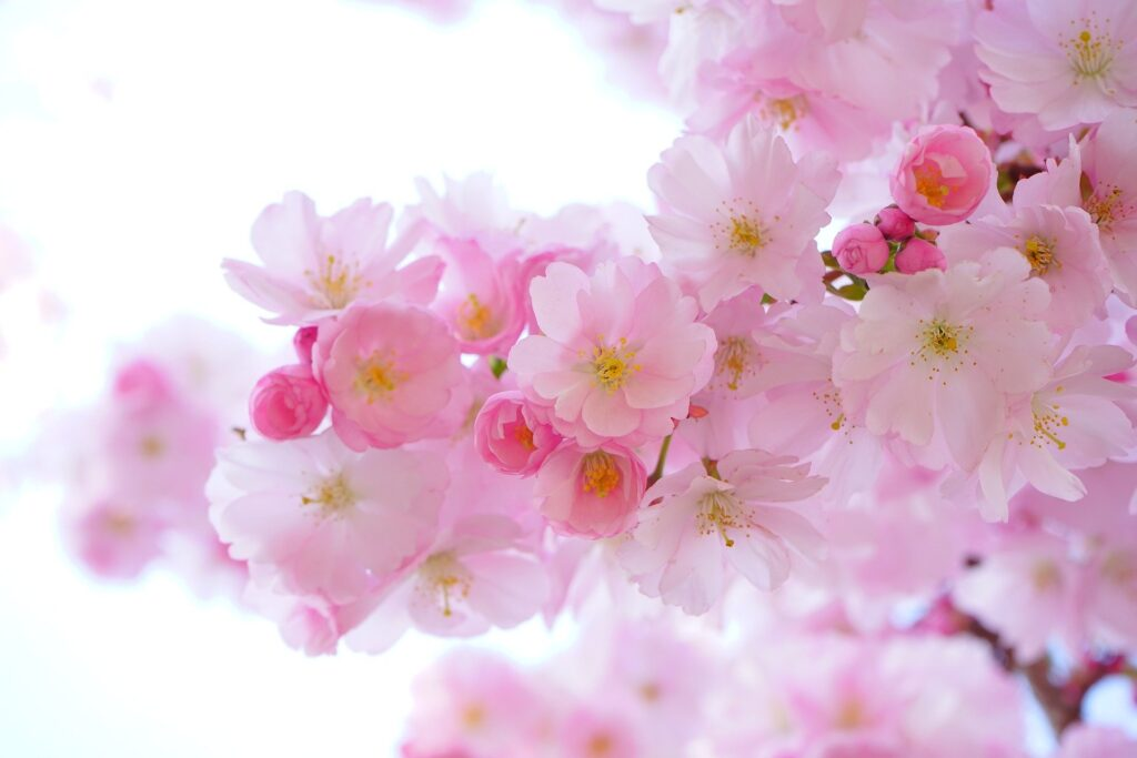 Flores rosadas